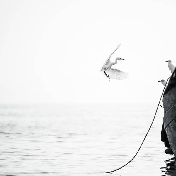 Animal Themes Art Print featuring the photograph Sea Birds Of Shekou Shenzhen by Capturing A Second In Life, Copyright Leonardo Correa Luna