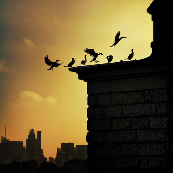 Central Park Art Print featuring the photograph Silhouettes Of Cormorants by Istvan Kadar Photography