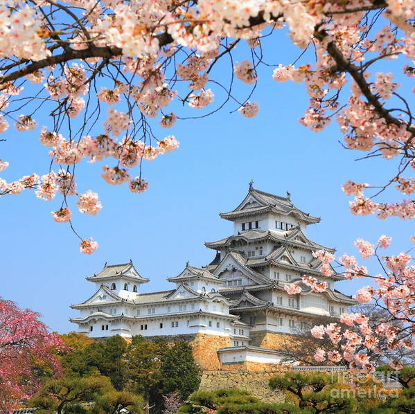 Castle Art Print featuring the photograph Spring Cherry Blossoms And The Main by S.r.lee Photo Traveller