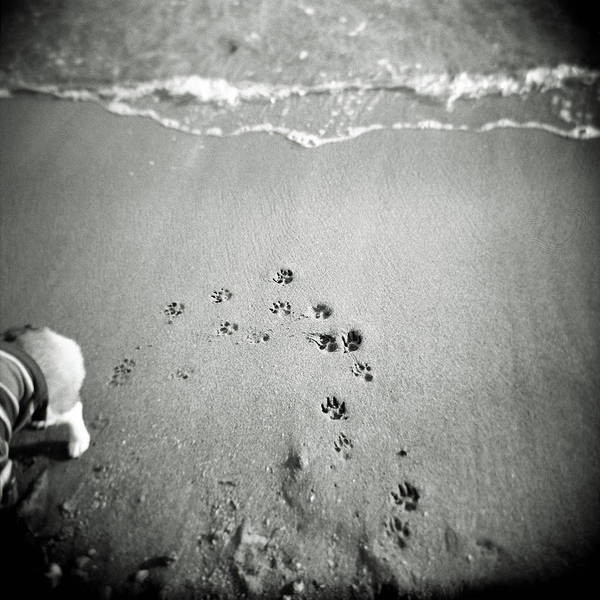 Pets Art Print featuring the photograph The Beach by Moaan