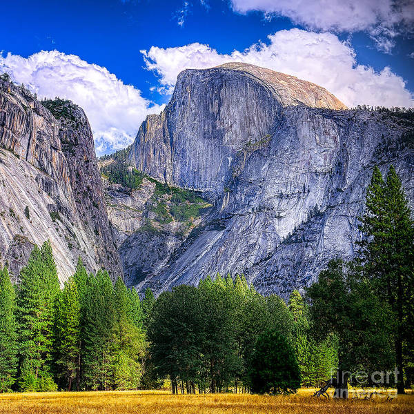 Capitan Art Print featuring the photograph Yosemite National Park California by Dancestrokes