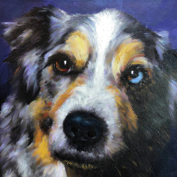 Blue Merle Art Print featuring the painting Blue Merle Dog Portrait by Portraits By NC