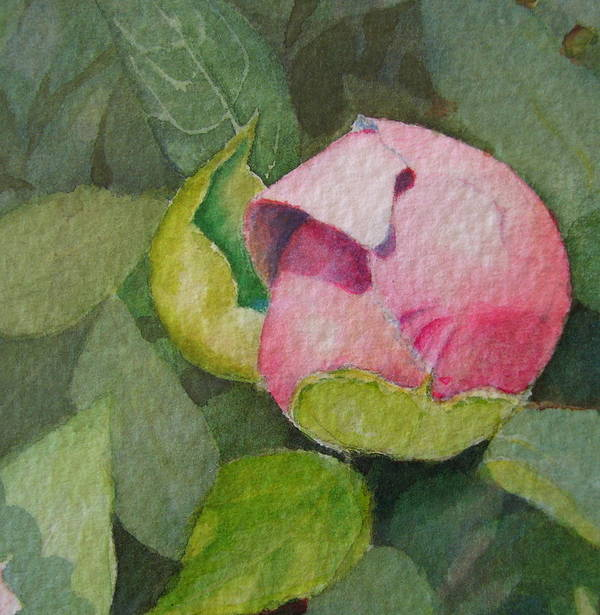 Watercolor Art Print featuring the painting Peony Bud by Mary Ellen Mueller Legault