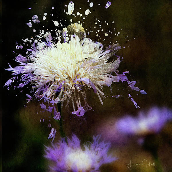 Purple Art Print featuring the digital art Pincushion Flower by Linda Lee Hall