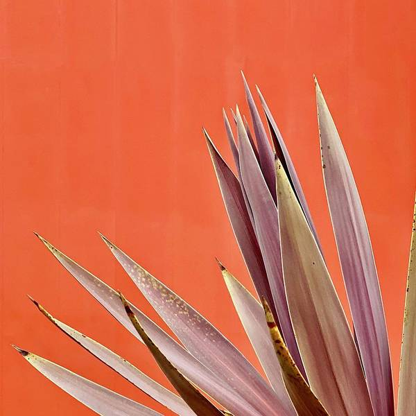Art Print featuring the photograph Plant On Orange by Julie Gebhardt