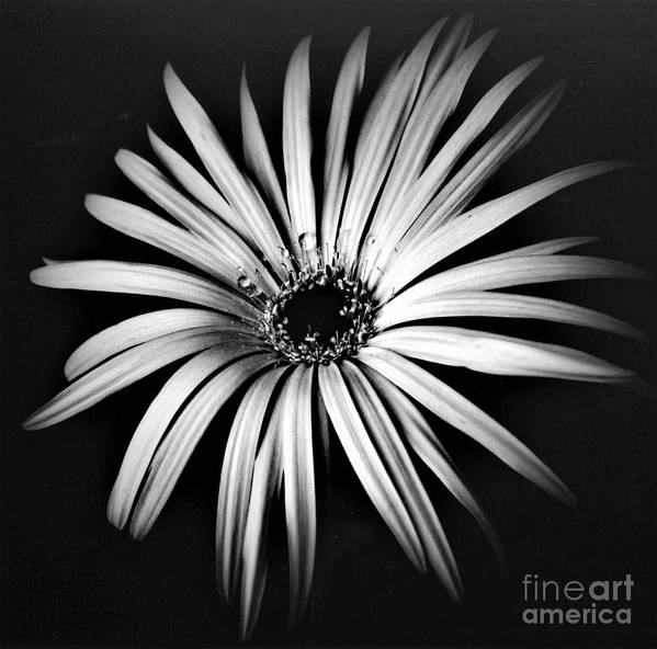 Photo Art Print featuring the photograph Star by Alex Caminker