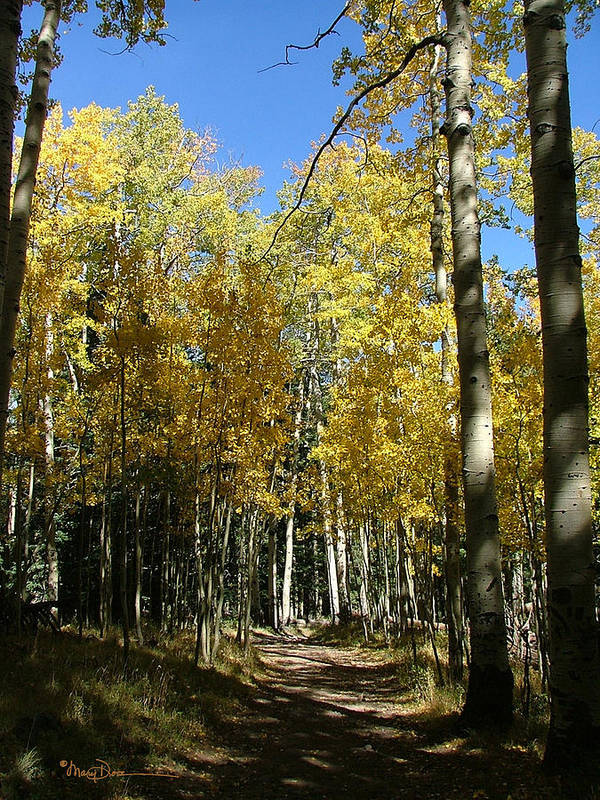 Mary Dove Art Art Print featuring the photograph Flagstaff Aspens 802 by Mary Dove