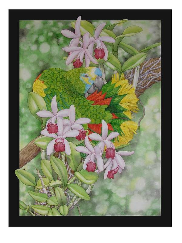 Orchids Art Print featuring the painting Amazon 3 by Darren James Sturrock