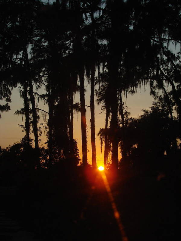 Sunset Art Print featuring the photograph Sunset In The Woods by Kimberly Camacho