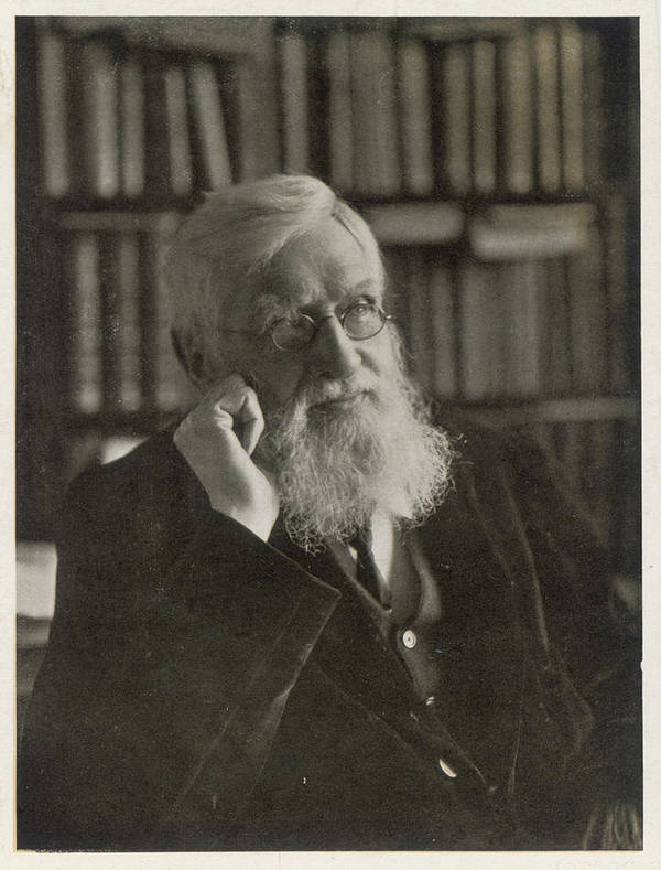 Alfred Russel Wallace (1823-1913) by Mary Evans Picture Library