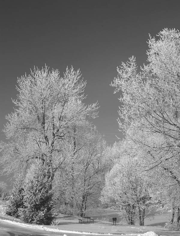 Snow Art Print featuring the photograph 020810-72 by Mike Davis