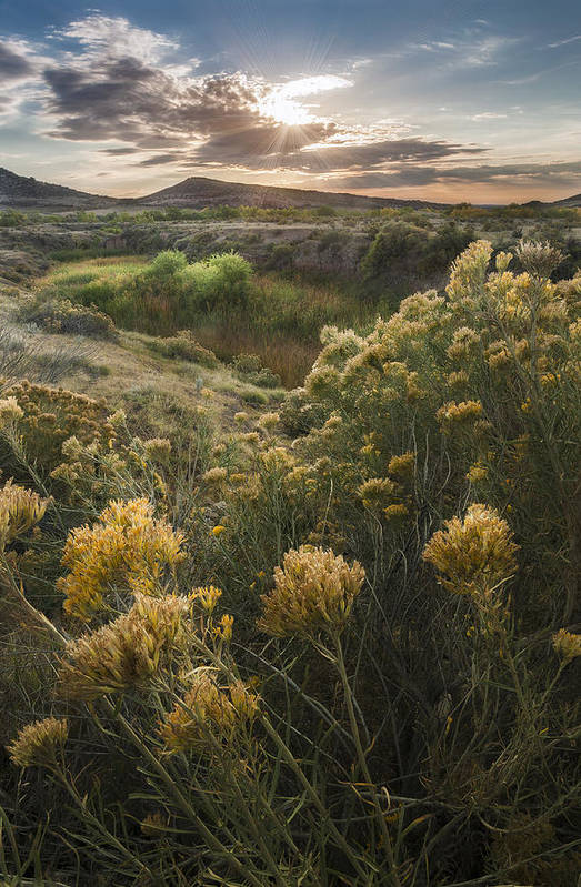Sadge Art Print featuring the photograph Foothills Sage by Michael Van Beber
