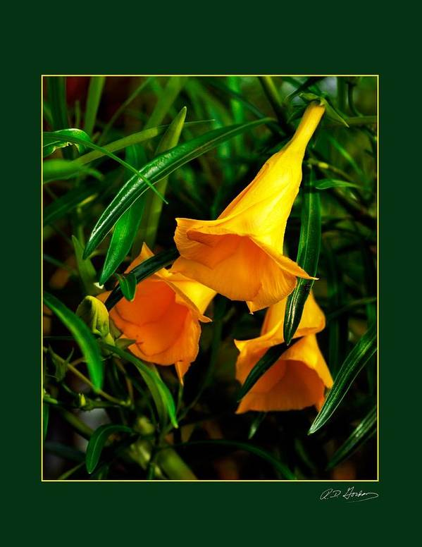Flower Art Print featuring the photograph Clarion Call by Richard Gordon