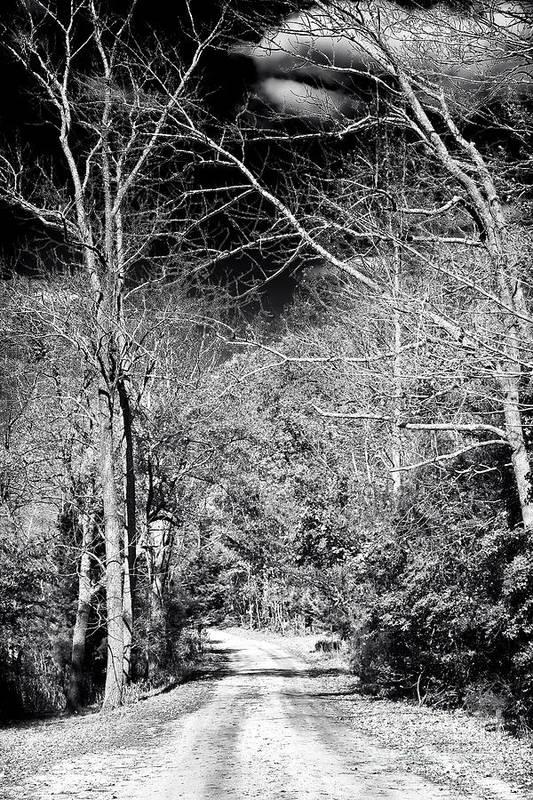 Pine Barrens Path Art Print featuring the photograph Pine Barrens Path by John Rizzuto
