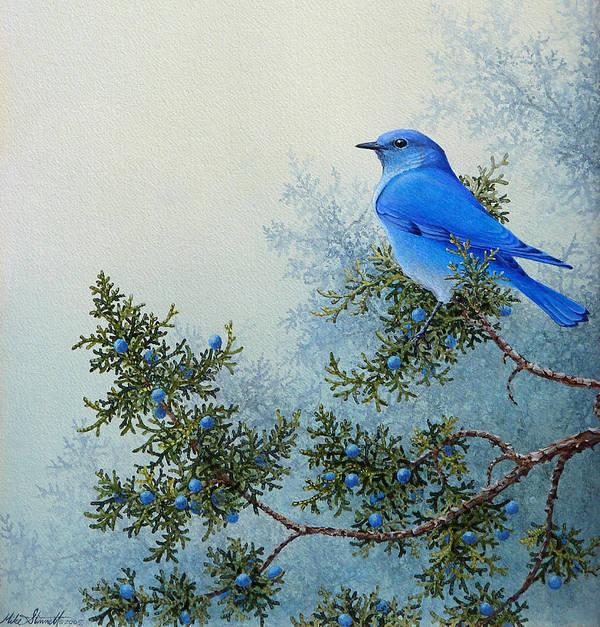 Juniper Bluebird by Mike Stinnett