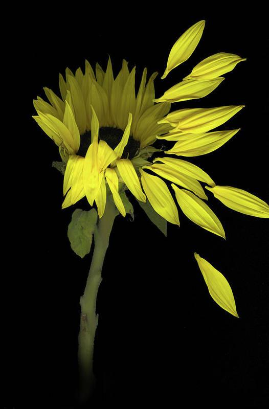 Sunflower Art Print featuring the digital art Sunflower Breeze by Sandi F Hutchins