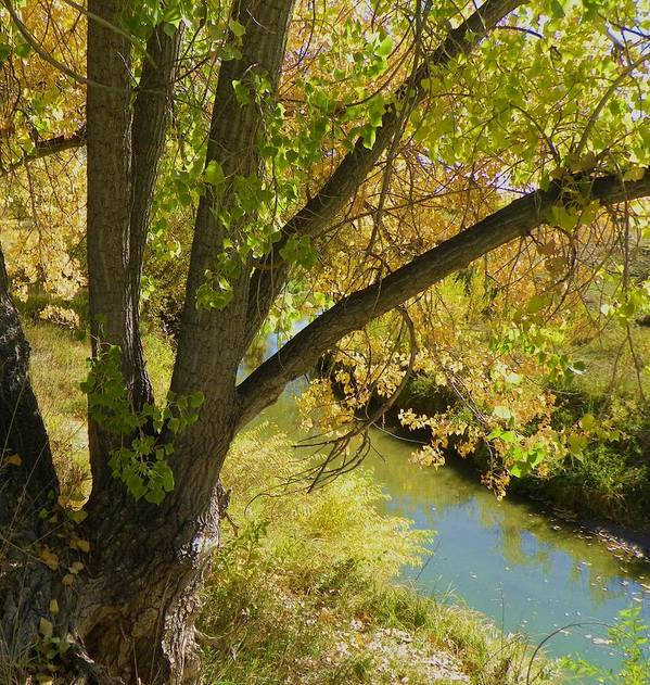 Creek Art Print featuring the photograph Hidden Creek by Vicky Mowrer
