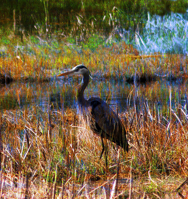 Art Print featuring the photograph Heron Blue by Melvin Kearney
