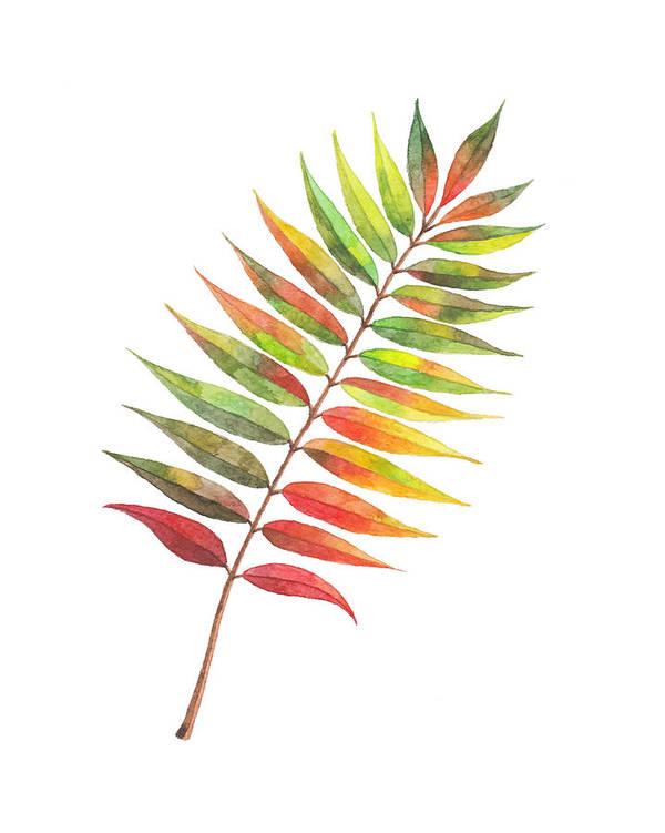 Autumn rowan tree leaf by Kseniya Kurbatova