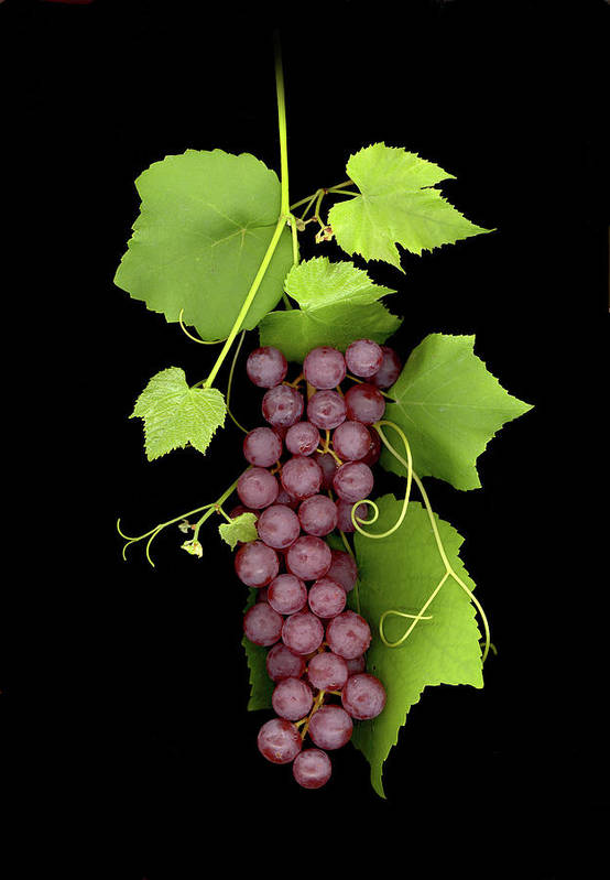 Art Print featuring the photograph Fruit Of The Vine by Sandi F Hutchins