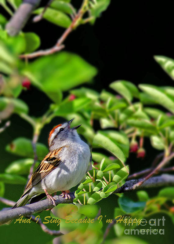 Bird Art Print featuring the photograph Sparrow 1 by Richard Oliver