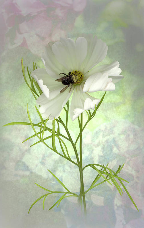 Cosmo Art Print featuring the photograph Delicate Nature Of Both by Sandi F Hutchins
