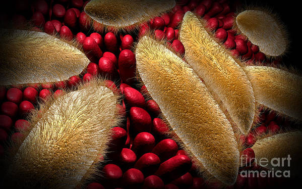Red Print featuring the digital art Conceptual Image Of Paramecium by Stocktrek Images