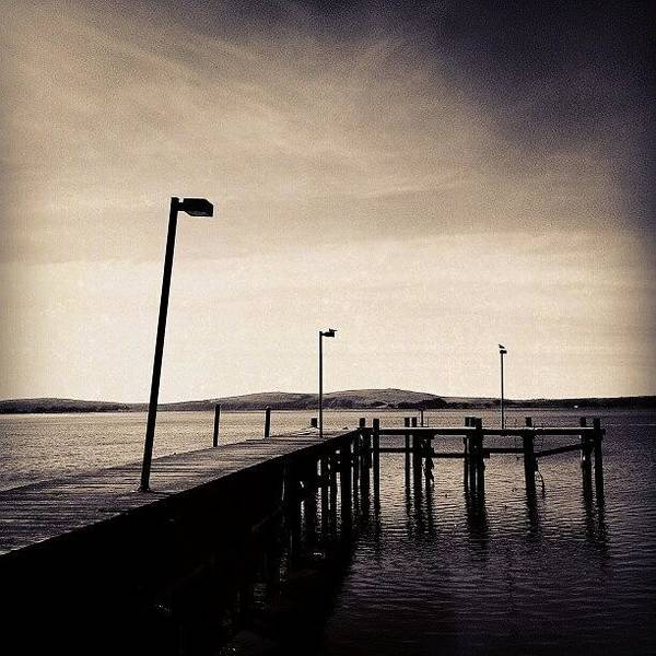 Black And White Print featuring the photograph 2 Bird Dock by CML Brown