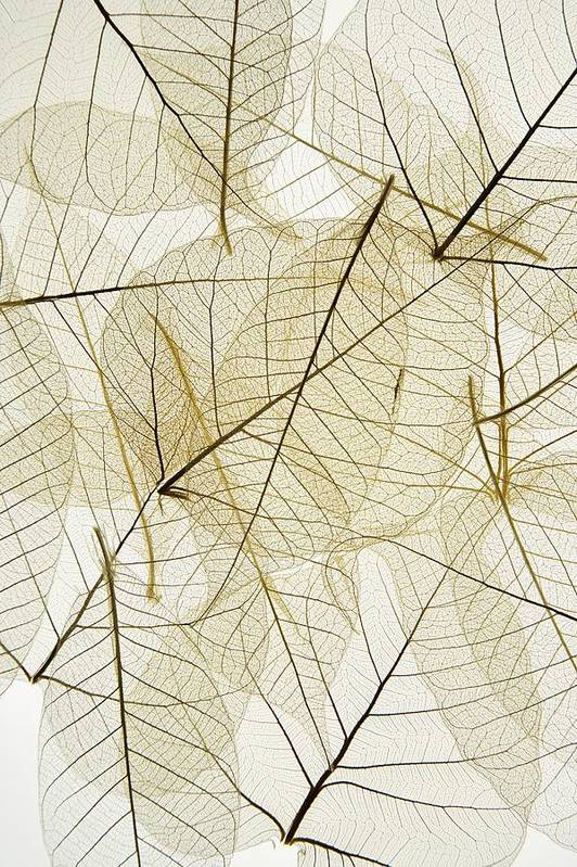 Delicate Print featuring the photograph Layered Leaves by Kelly Redinger