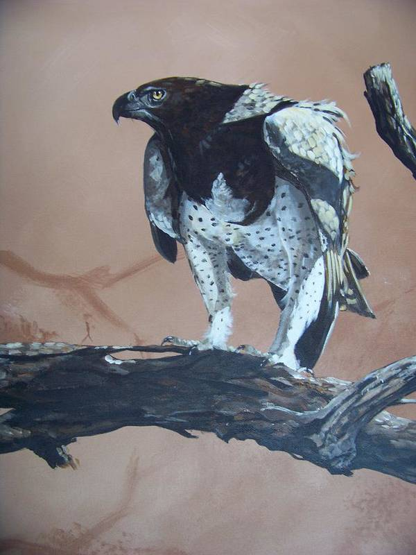 Martial Eagle Print featuring the painting Martial Eagle by Robert Teeling