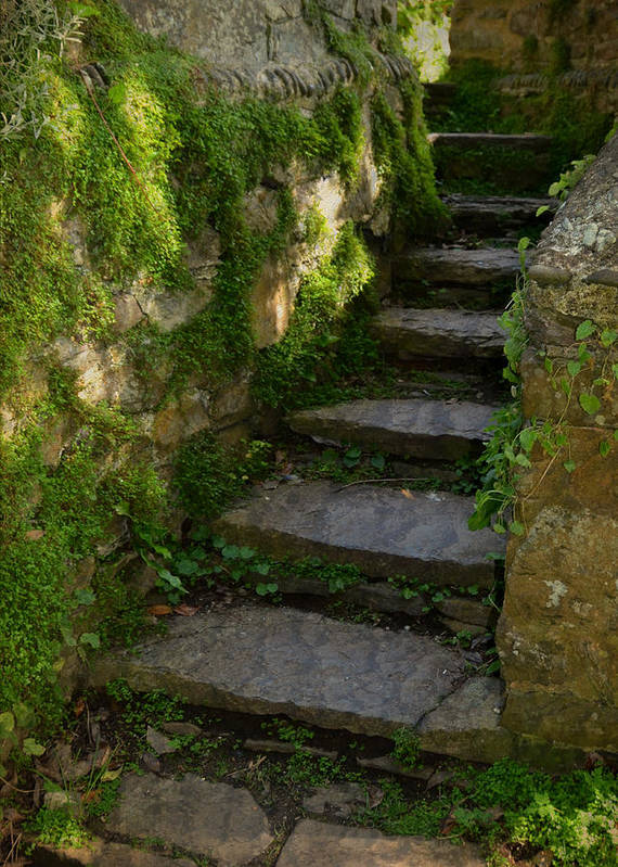 Step Print featuring the photograph Mossy Steps by Carla Parris