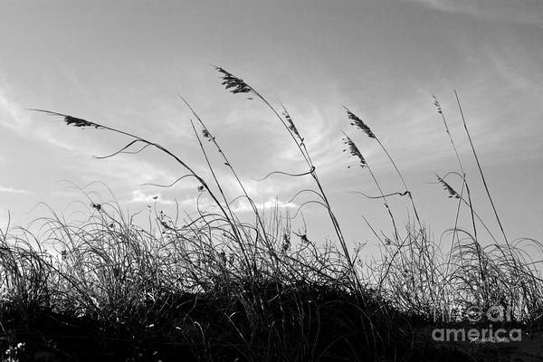 Sea Oats Silhouette Print featuring the photograph Sea Oats Silhouette by Michelle Wiarda