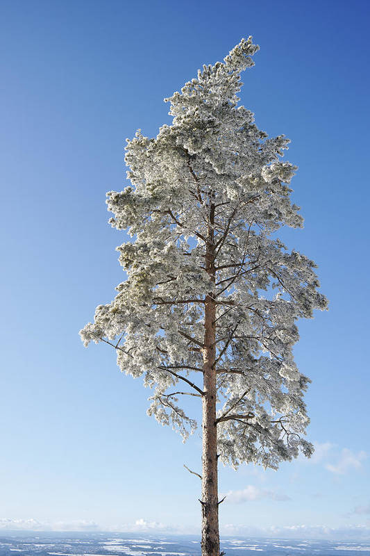 Europe Print featuring the pastel Winter Tree Germany by Francesco Emanuele Carucci