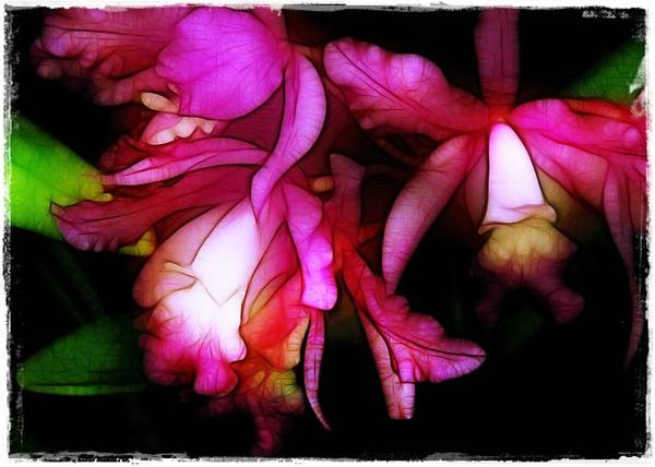 Orchids Print featuring the photograph Cattleyas by Judi Bagwell