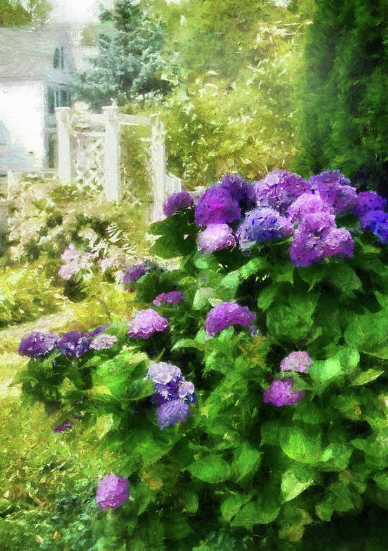 Suburbanscenes Print featuring the photograph Flower - Hydrangea - Lovely Hydrangea by Mike Savad