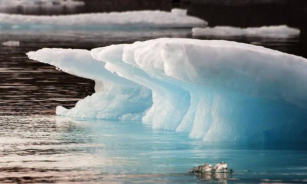 Iceberg Print featuring the photograph Ice Bears by Elisabeth Van Eyken