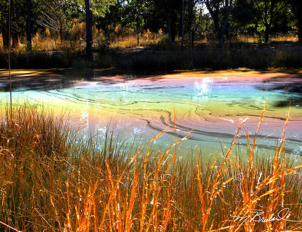 Pond Print featuring the photograph Magic Pond by Melissa Wyatt