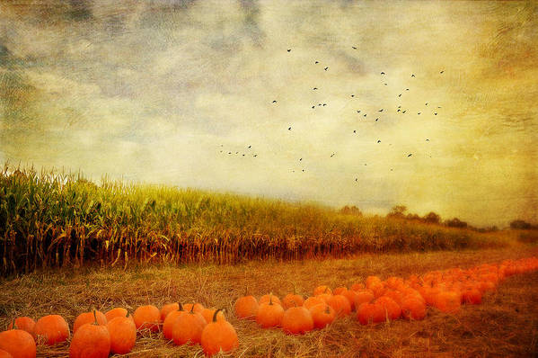 Pumpkins Print featuring the photograph Pumpkins In The Corn Field by Kathy Jennings
