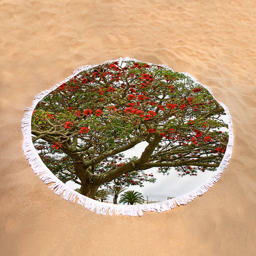 Milkwood Tree In Donkin Reserve In Port Elizabeth South Africa Round