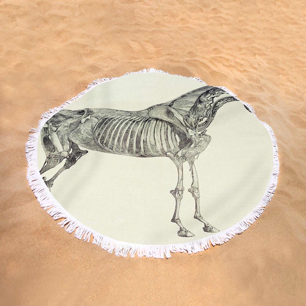 The Anatomy Of The Horse Round Beach Towel for Sale by George Stubbs