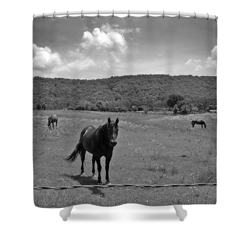 Horses Shower Curtain featuring the photograph Black And White Pasture With Three Horses by Anne Cameron Cutri