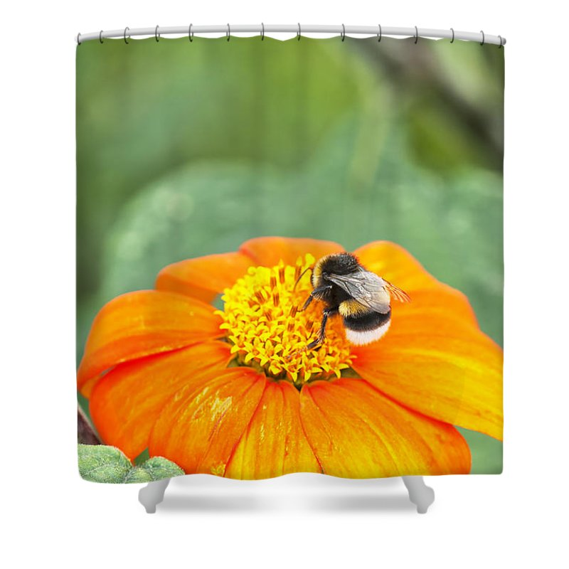 Insect Shower Curtain featuring the photograph Bumble Bee 01 by Antony McAulay