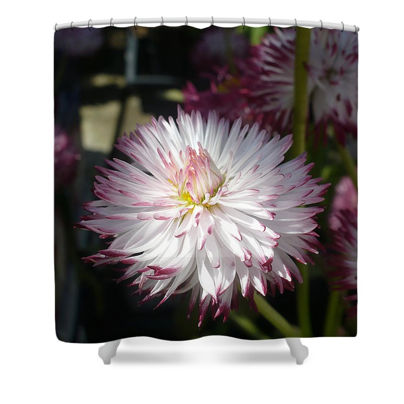 English Shower Curtain featuring the photograph English Daisy by Nicki Bennett