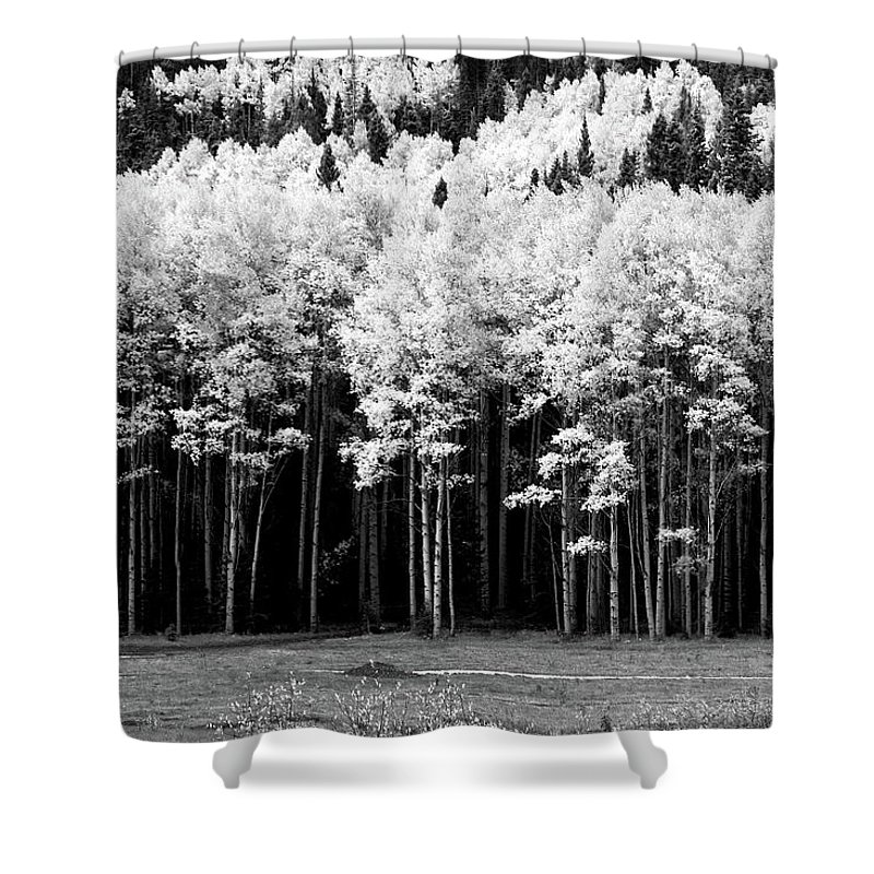 Red River Shower Curtain featuring the photograph New Mexico Aspens by Ron Weathers