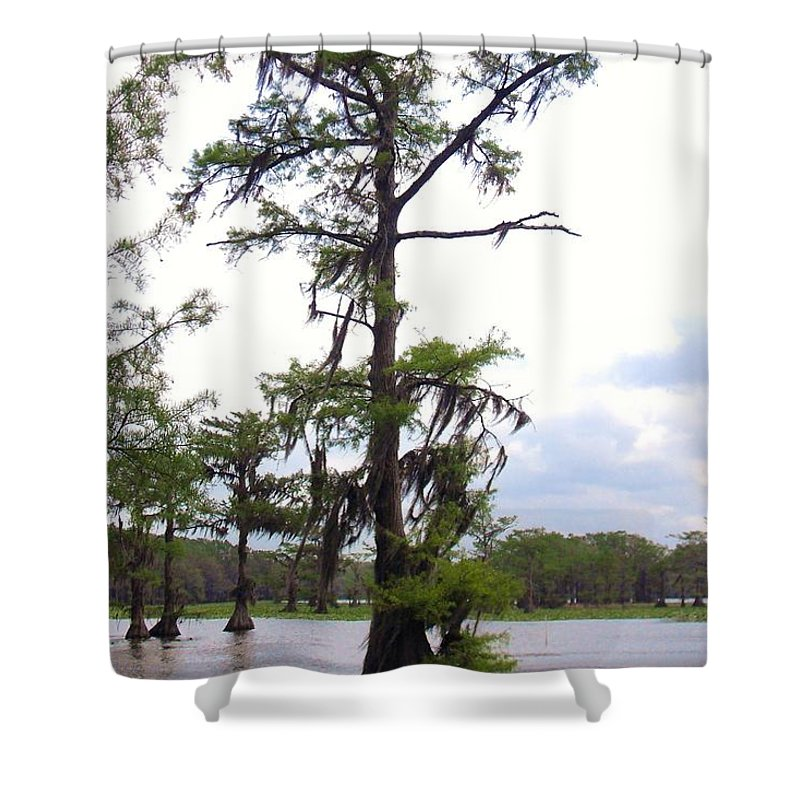 Cypress Trees Shower Curtain featuring the photograph Cypress Trees by Donna Wilson