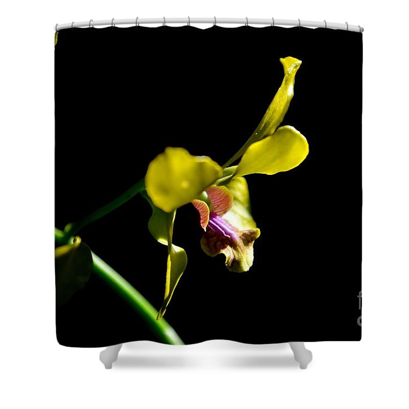 Nature Shower Curtain featuring the photograph Yellow Orchid by Michelle Meenawong