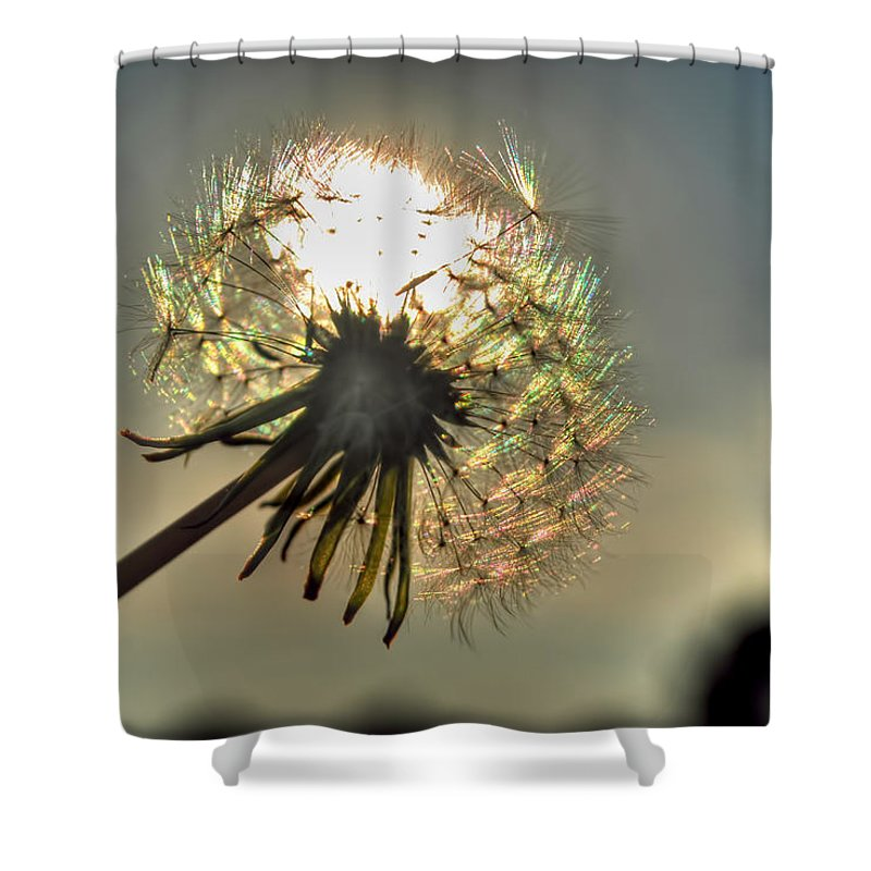 Taraxacum Shower Curtain featuring the photograph 001 Make A Wish At Sunset by Michael Frank Jr