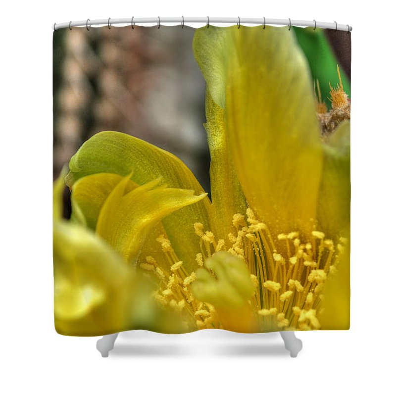 Buffalo Botanical Gardens Shower Curtain featuring the photograph 003 For The Cactus Lover In You Buffalo Botanical Gardens Series by Michael Frank Jr