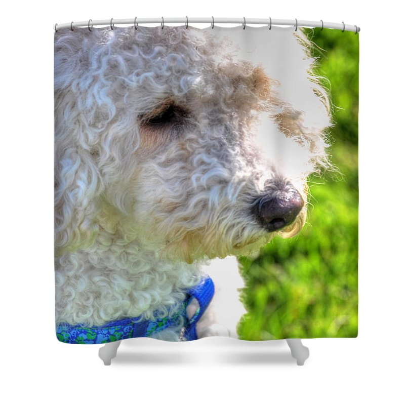 Pet Shower Curtain featuring the photograph 01 Portriat Of Wizard  Pet Series by Michael Frank Jr
