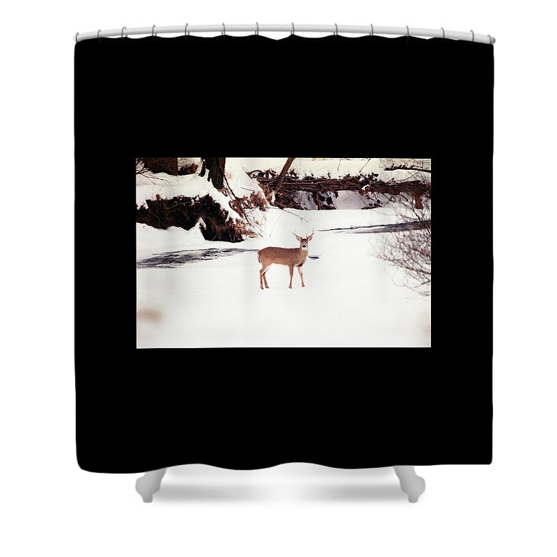 Whitetail Deer Shower Curtain featuring the photograph 080706-89 by Mike Davis